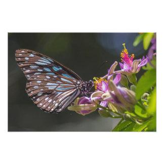 青いトラ、ピンクの花 フォトプリント
