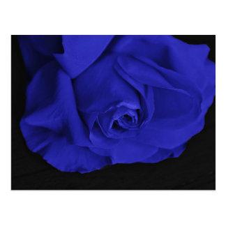 青いバラ3 ポストカード