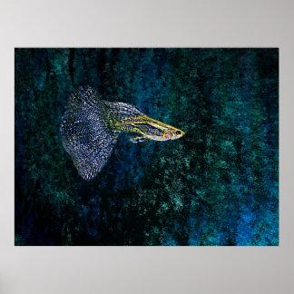 青いファインアートの写真の魚 プリント