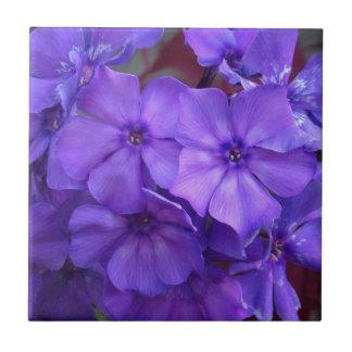 青いフロックス属によってはタイルが開花します タイル