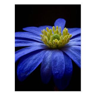 青いマクロ花 ポストカード