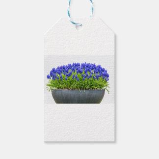 青いムスカリが付いている灰色の金属の花箱 ギフトタグ