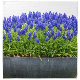 青いムスカリが付いている灰色の金属の花箱 ナプキンクロス