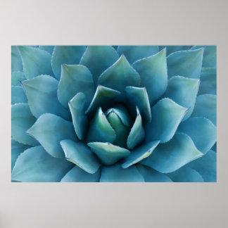 青いリュウゼツラン ポスター