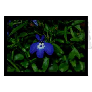 青いロベリア カード