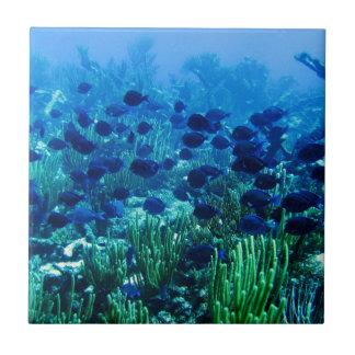青い円盤投げの魚の群れ タイル