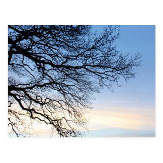青い冬の空の木のシルエット ポストカード