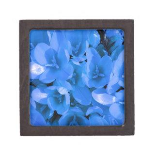 青い夏 ギフトボックス