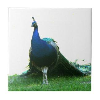 青い孔雀のちょうど草の澄んな空 タイル