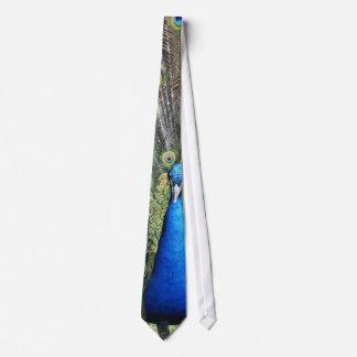 青い孔雀の完全な羽 ネクタイ