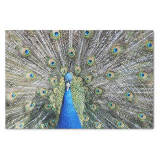 青い孔雀の完全な羽 薄葉紙