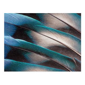 青い愛鳥羽のデザイン ポストカード