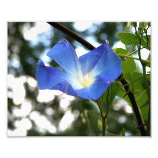 青い朝顔のクローズアップの写真のプリント フォトプリント