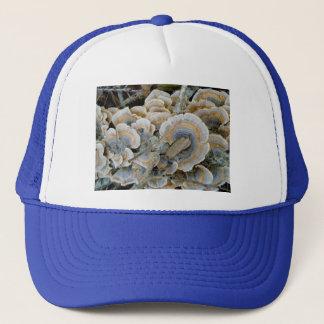 青い棚菌類の帽子 キャップ