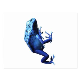 青い毒投げ矢のカエル ポストカード
