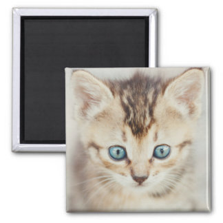青い目の子猫 マグネット