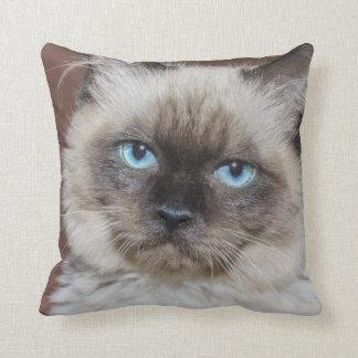 青い目の猫の投球のクッション クッション