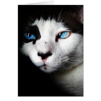 青い目の猫 カード