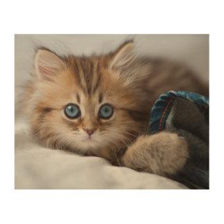 青い目の遊ぶことの子ネコ ウッドウォールアート