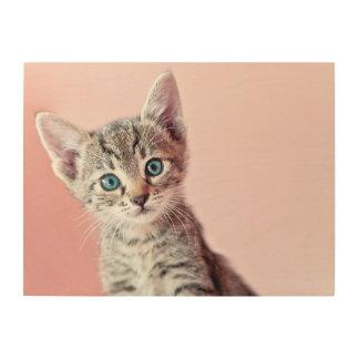 青い目を持つかわいい子ネコ ウッドウォールアート