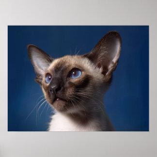 青い目を持つシャム猫 ポスター