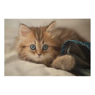 青い目を持つ子ネコ ウッドウォールアート