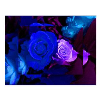 青い紫色のバラ はがき