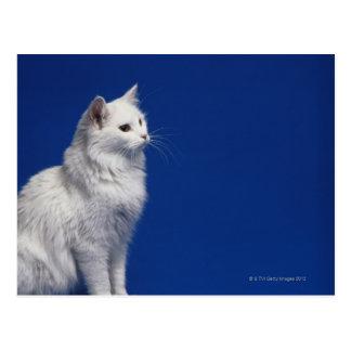 青い背景に対して坐っている猫 ポストカード