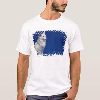 青い背景に対して坐っている猫 Tシャツ