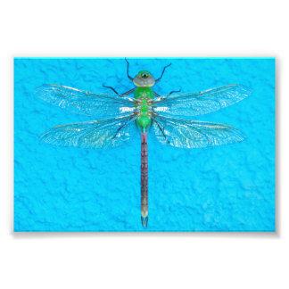 青い背景のマクロ緑のトンボ フォトプリント