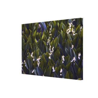 青い色合いが付いている谷の花パッチのユリ キャンバスプリント