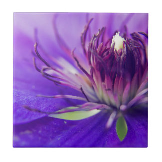 青い花の写真のファインアートの自然のがく タイル