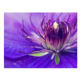 青い花の写真のファインアートの自然のがく ポストカード