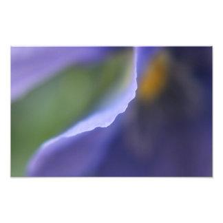 青い花の抽象芸術の写真のプリント フォトプリント