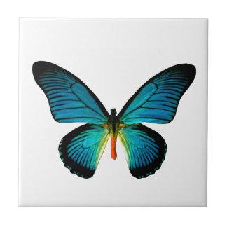 青い蝶タイル タイル