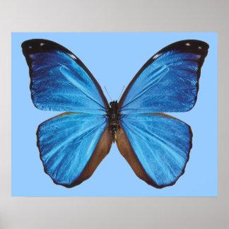青い蝶ポスター ポスター