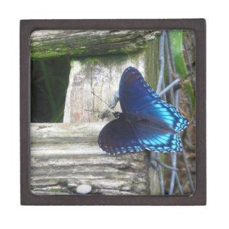 青い蝶休息のギフト用の箱 ギフトボックス