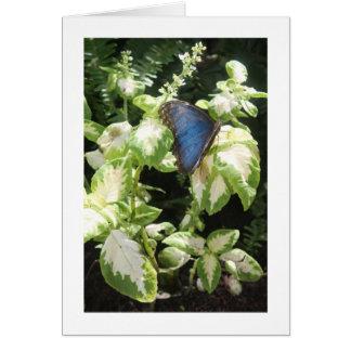 青い蝶誕生日 カード