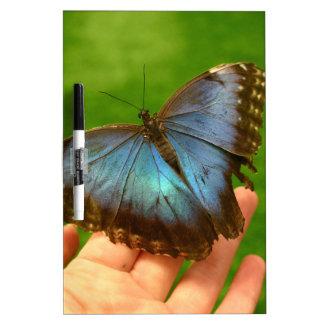青い蝶 ホワイトボード