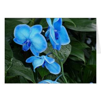 青い融合 カード