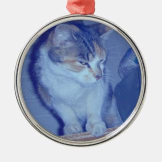 青い調子のさらさの子猫 メタルオーナメント