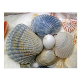 青い貝殻の写真撮影の郵便はがき ポストカード