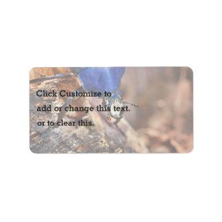 青い陸生動物飼育器 ラベル