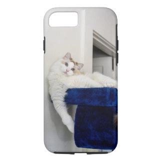 青い「巣」のiPhoneの箱の白い猫 iPhone 8/7ケース
