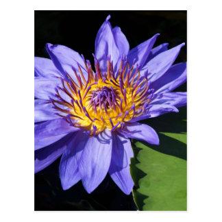 青い《植物》スイレン ポストカード