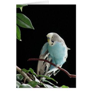青いBudgieの挨拶状、インコの挨拶状 カード