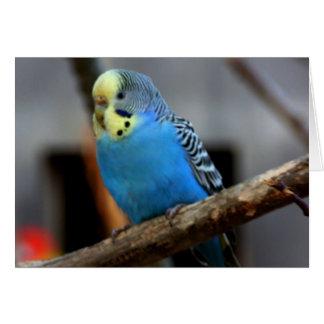 青いBudgie カード