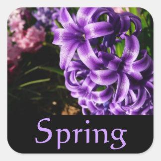 青いHyacinthの春のステッカー スクエアシール