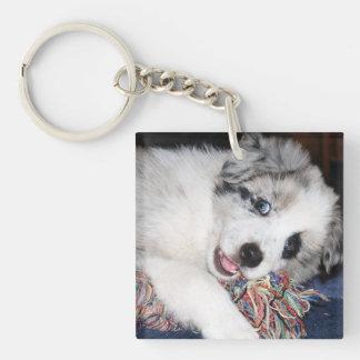 青いMerleのボーダーコリーの子犬 キーホルダー