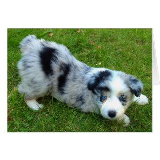 青いMerleのボーダーコリーの子犬、青い目 グリーティングカード